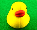 Yellow rubber duck closeup of on green felt background Stock Images