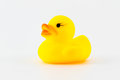 Yellow rubber duck isolated on the white background Stock Photography