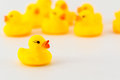 Yellow rubber duck isolated on the white background Stock Photos