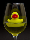 Yellow rubber duck in a wineglass Stock Photos