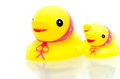Yellow rubber duckies mommy duck and small on a white background Stock Photography