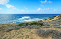 Yellow sand and green bushes in argentiera coastline sardinia Royalty Free Stock Image