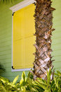Yellow Shutters with Palm Trunk Stock Image
