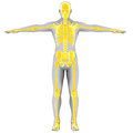 Yellow skeleton d render back view Royalty Free Stock Image