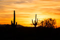Yellow sky saguaro silhouetten against red Stock Image