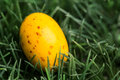 Yellow speckled easter egg nestled grass Royalty Free Stock Photos