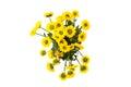 Yellow spring flower Royalty Free Stock Photo