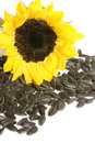 Yellow sunflower and sunflower seeds on a white background Royalty Free Stock Images