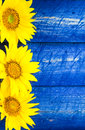 Yellow sunflowers painted fence Royalty Free Stock Photo