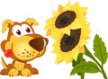 Yellow sunflowers and puppy Royalty Free Stock Image