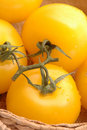 Yellow tomatoes 2 Stock Images