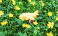 Yellow toy airplane in grass