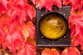 Yellow traffic light detail located in autumn red leaves Royalty Free Stock Image