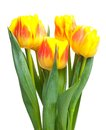 Yellow tulip bouquet with bright tulips isolated on white background Stock Photography