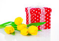 Yellow tulip flowers with red polka dot gift box on white background happy mothers day romantic still life fresh Royalty Free Stock Image