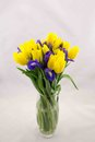 Yellow tulips and blue irises, bouquet Royalty Free Stock Photo