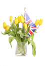 Yellow tulips with Britsh union jack flag Royalty Free Stock Photo