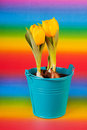 Yellow tulips in bucket Royalty Free Stock Images