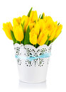 Yellow tulips in bucket on white background Stock Images