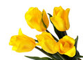 Yellow tulips closeup on white close up isolated a background Stock Image