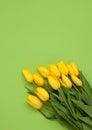 Yellow tulips on green