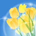 Yellow tulips illustration of blossoming against festive blue background Royalty Free Stock Photos