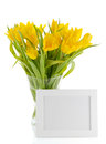 Yellow Tulips and photo frame Royalty Free Stock Image