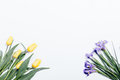 Yellow tulips and purple irises on a white background, top view