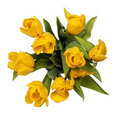 Yellow tulips on top isolated with clipping path. Stock Image