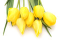 Yellow tulips on a white background Royalty Free Stock Photo