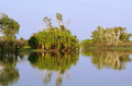 Yellow water billabong kakadu australia pandanus trees being reflected in the clear at dawn Stock Images