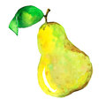 Yellow watercolor pear on a white background