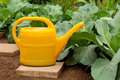 Yellow watering can Royalty Free Stock Photography