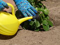 Yellow watering can gardener using a to water the plants Stock Photography
