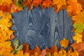 Yellow wet autumn leaves on the background a blue old wood Royalty Free Stock Photo