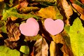 Yellow wet autumn leaves on the background a dark old wood Royalty Free Stock Photo