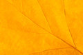 Yellowed leaf closeup as background Royalty Free Stock Photo