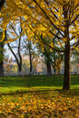 Yellowed leaves fell from the tree on the green grass in autumn morning early Stock Photography