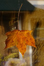 Yellowed maple leaf as the decoration on the window Royalty Free Stock Photos