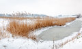 Yellowed reeds around frozen water snowy winter landscape with ice on a ditch and and a golden fringe of along the ditch side Stock Photos