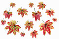 Yellowish orange maple leaves on white background Stock Images