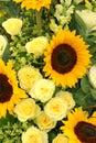 Yellows Royalty Free Stock Photo