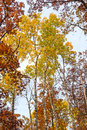 Yellows And Reds In The Fall F...