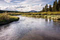 Yellowstone Back Country Trout Stream Royalty Free Stock Photo