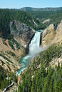 Yellowstone Lower Falls Royalty Free Stock Image