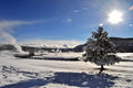 Yellowstone in winter snowy landscapes of park wyoming Royalty Free Stock Images