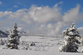 Yellowstone in winter snowy landscapes of park wyoming Stock Images