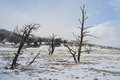 Yellowstone in winter snowy landscapes of park wyoming Royalty Free Stock Image