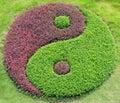 The yin and yang Royalty Free Stock Photo