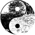 Yin yang tree in black and white Royalty Free Stock Photo